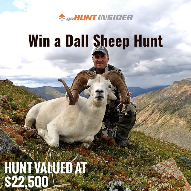 Gohunt $22,500 Dall Sheep Hunt Giveaway –Really?